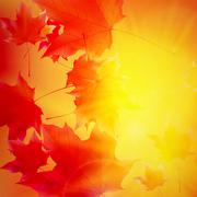 Delicate autumn sun with glare on gold sky. Stock Illustration