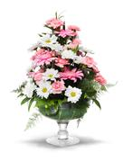 gerber daisy arrangement - stock photo