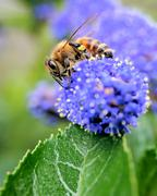 how to get a buzz...!! - stock photo