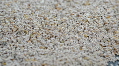 Psyllium seeds (loopable) Stock Footage