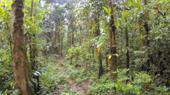 Flying through tropical rainforest above an old logging trail. Stock Footage