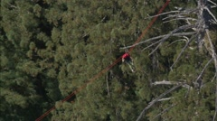 Forrest Treetop Zip Lining Stock Footage