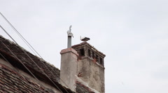 White stork on top of a house chimney, nest, migratory wild bird Stock Footage