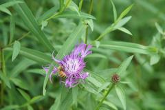 Bee pollenating flower Stock Photos