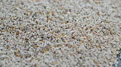 Psyllium seeds (not loopable) Stock Footage