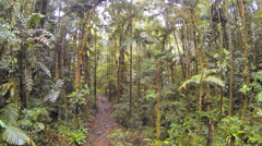 Flying through tropical rainforest above an old logging trail Stock Footage