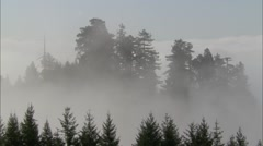 Forest Treetop Fog - stock footage
