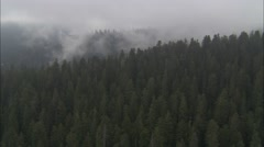 Forest Treetop Fog Stock Footage