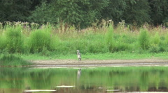 Heron on Fobney nature reserve 51 Stock Footage