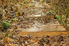 the wooden bridge covered with the fallen down grass in the autumn - stock photo