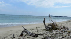 Driftwood and corals on a beach on Gili Air island Stock Footage