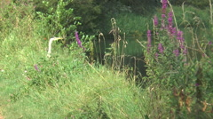 Heron on Kennet 50 Stock Footage