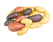 Fingerling potatoes of several colors isolated Stock Photos