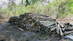 Pile of bamboo neatly stacked on sand Stock Footage