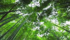 Bamboo forest in Japan. Rotating shot. Stock Footage