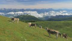 0440 UHD Cows on the Alps. Summer pasture Stock Footage