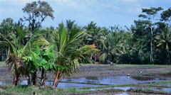 Panoramic view of rice fields covered with water in Bali, Indonesia - stock footage