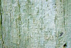 Texture of old wooden wall with a faded green flaky paint Stock Photos
