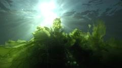 Underwater sunbeams with shaking green algae Stock Footage