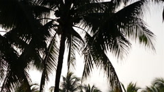 Palm Tree Silhouettes in Morning Light Stock Footage