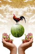 Stock Illustration of plant and chicken in the hand, good organic farm concept