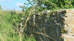 Stone wall in the country side Stock Footage