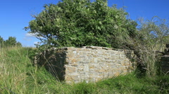 Stone wall and tree on a windy day 1 Stock Footage