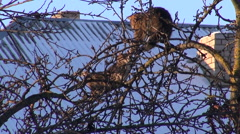 Two cats on winter apple tree Stock Footage