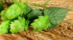 Hops and barley malt in the basket,panning Stock Footage
