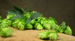 Detail of hop cones in the studio,real time,rotation Stock Footage