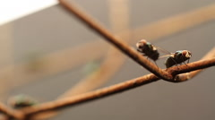 Lord of the Flies (Macro lens) Stock Footage
