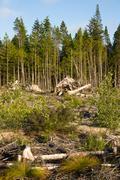 Landscape left scarred after logging clear cut Kuvituskuvat