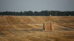 Cleaner wheat field after harvest with haystacks Stock Footage