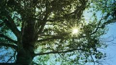 Golden Light | Sun through tree limbs Stock Footage