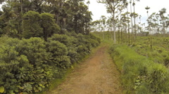 Tropical rainforest converted to a cattle farm. Stock Footage