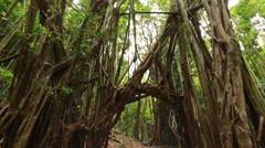 POV walking along Hawaii trail through tropical forrest Stock Footage