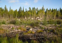 Landscape left scarred after logging clear cut Stock Photos