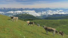 0440 Cows on the Alps. Summer pasture Stock Footage