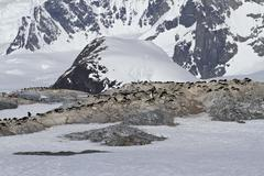 several colonies of adelie penguins on the antarctic island on a background o - stock photo