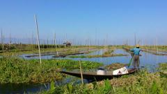 Floating gardens of Inle Lake village in Myanmar (Burma) Stock Footage