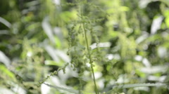 The sun shining through forest in summer, natural field of nettles Stock Footage