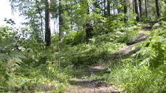 Path in the wood - stock footage