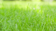 Green grass field slow dolly movement with slider Stock Footage