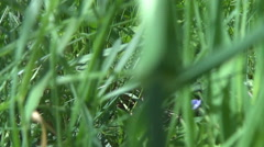 POV point of view walking green grass mountain adventure hiking pasture day life - stock footage