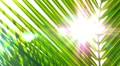 Sun through Palm Leaves. Slow Motion. HD Footage