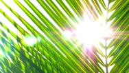 Stock Video Footage of Sun through Palm Leaves. Slow Motion.
