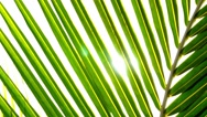 Stock Video Footage of Palm Leaf and Sun Beams. Slow Motion.