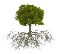Tree with root Stock Illustration
