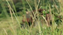 Large rusty vechicle behind long grass 3 Stock Footage