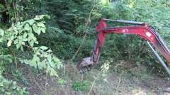 track hoe excavator clearing trees and brush  - stock footage